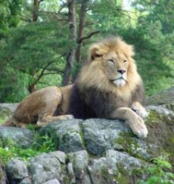 Borås lejon