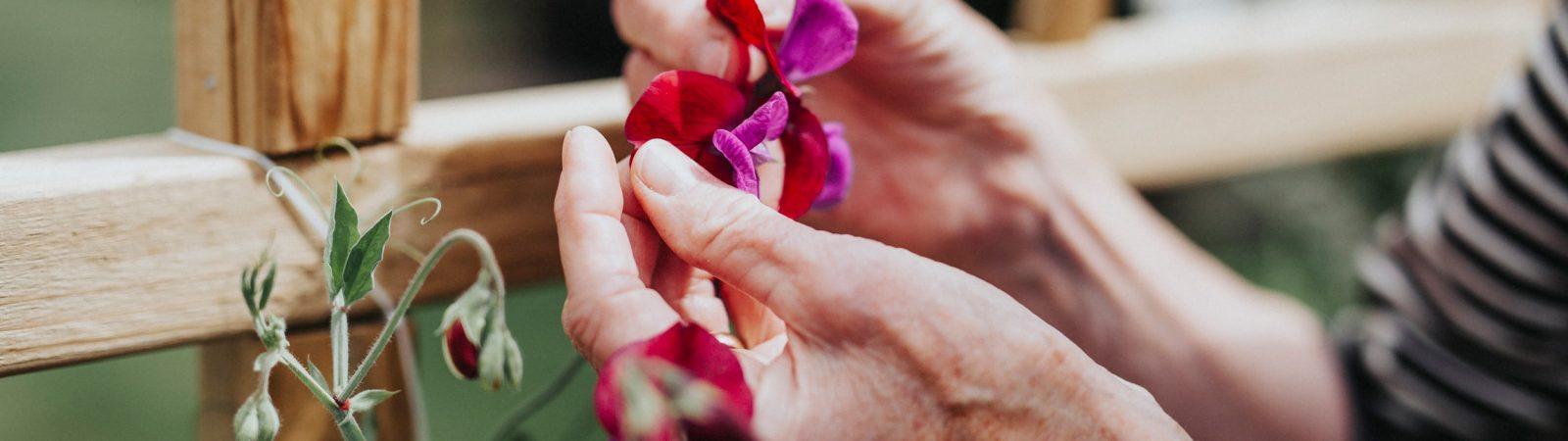 Händer håller blommor